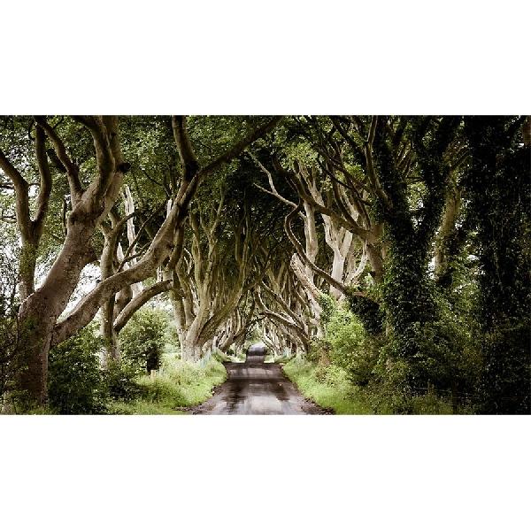 Fans Game of Thrones? Siap-siap Tur Studionya Bakal Dibuka di Irlandia Utara