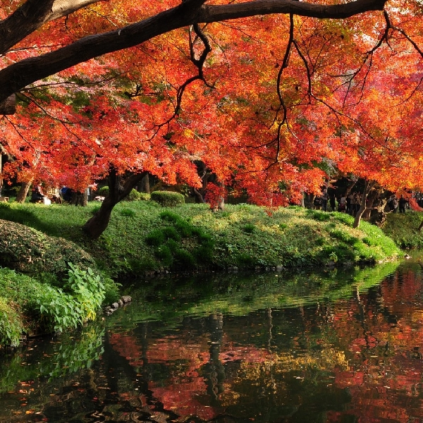 Tersesat Dalam Pesona Taman Koishikawa Korakuen