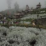 Pesona Bunga Salju Bali