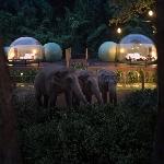 Hotel Berfasilitas Jungle Bubbles Memungkinkan Tamu Tidur di Antara Gajah