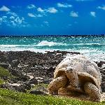 Ini Alasan Kenapa Kamu Harus Liburan ke Galapagos