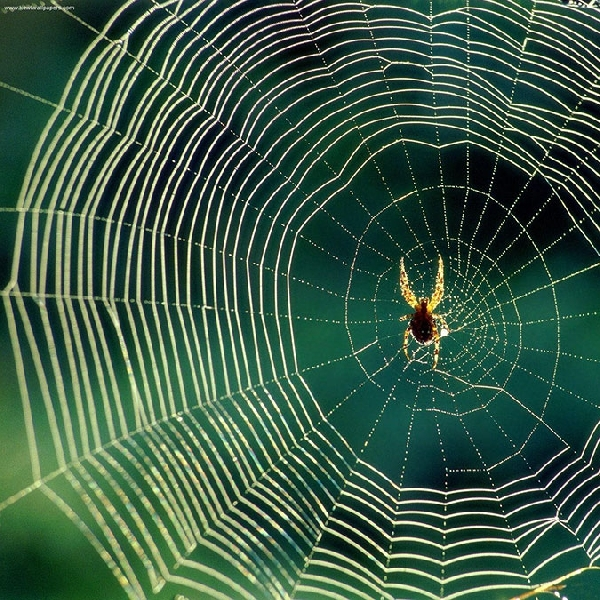 Ilmuwan Oxford Kerjakan Wearable Berbahan Jaring Laba-laba