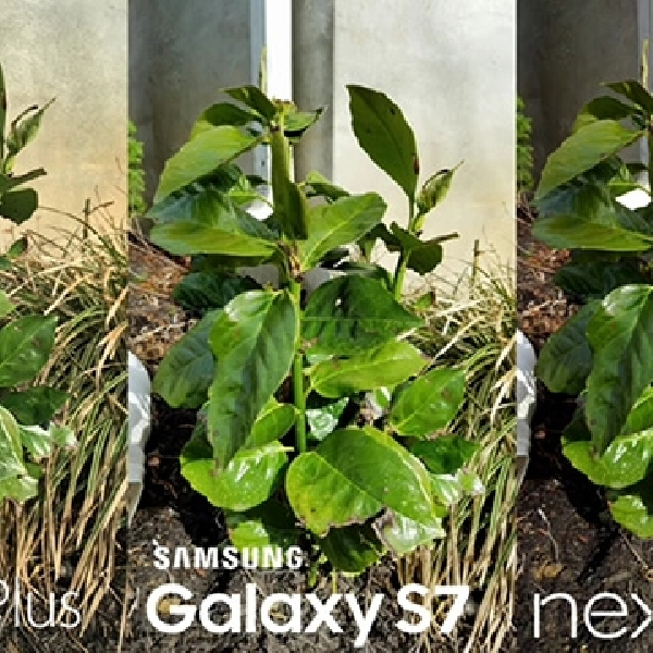 Uji Kamera Samsung Galaxy S7, iPhone 6s Plus Dan Nexus 6P, Unggul Mana ?
