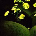 Siap Gantikan Fungsi Lampu, MIT Ciptakan Tanaman yang Bisa Menyala