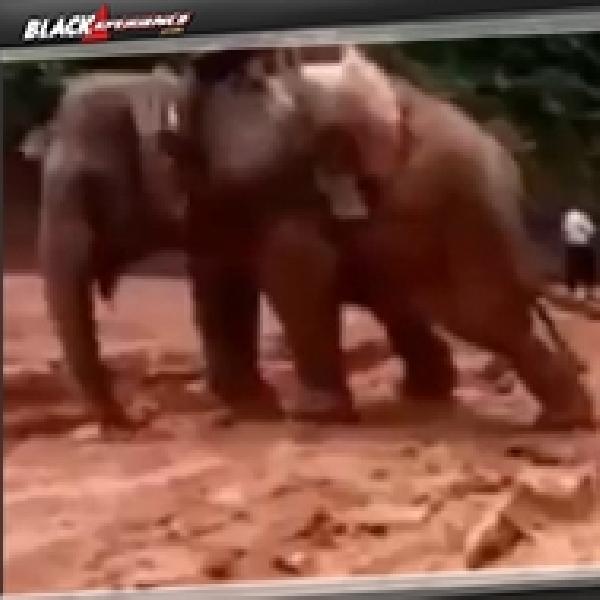 Ketika Mobil Off Road Terjebak di Kubangan Lumpur Gajah Jadi Solusinya
