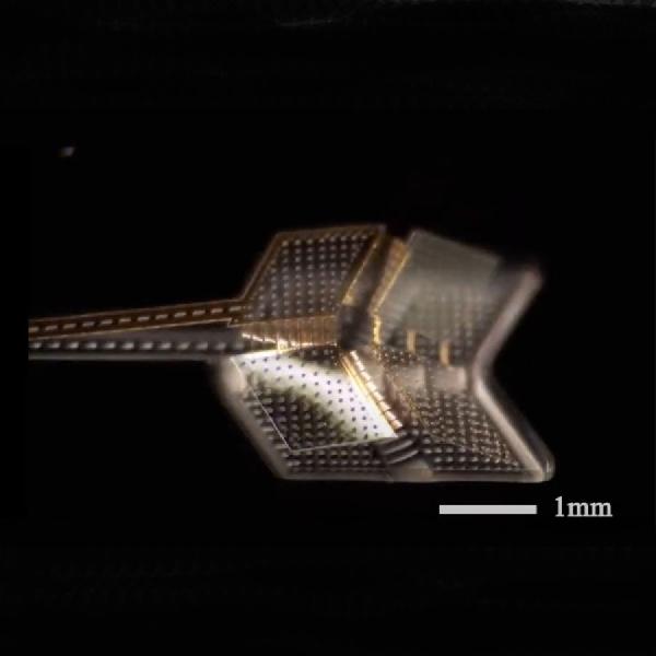 Terinspirasi Seni Lipat Kertas, Ilmuwan Ciptakan Mikrobot Origami