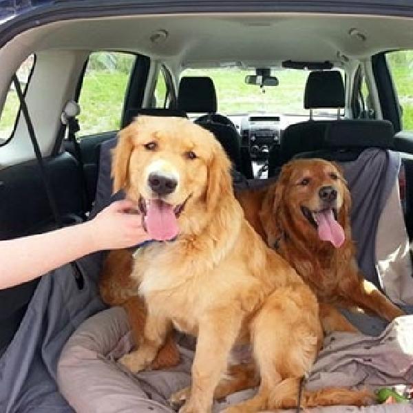 Tips Berkendara Aman Bersama Hewan Peliharaan